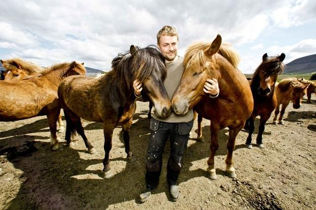 Icelandic horses with their handler