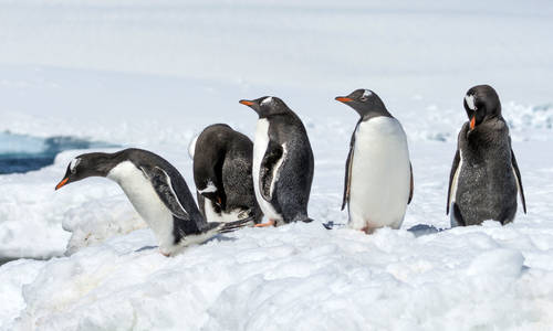 Picture of Antarctica and the Ross Sea