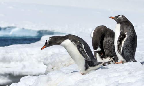 Picture of Antarctica 21 Air-Cruise
