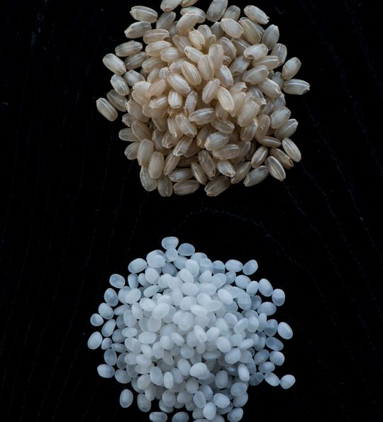 Grains of rice for Japanese sake brewing