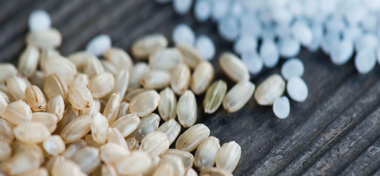 Grains of rice for sake brewing