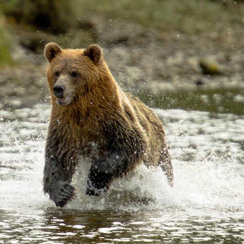 Discover iconic wildlife in British Columbia