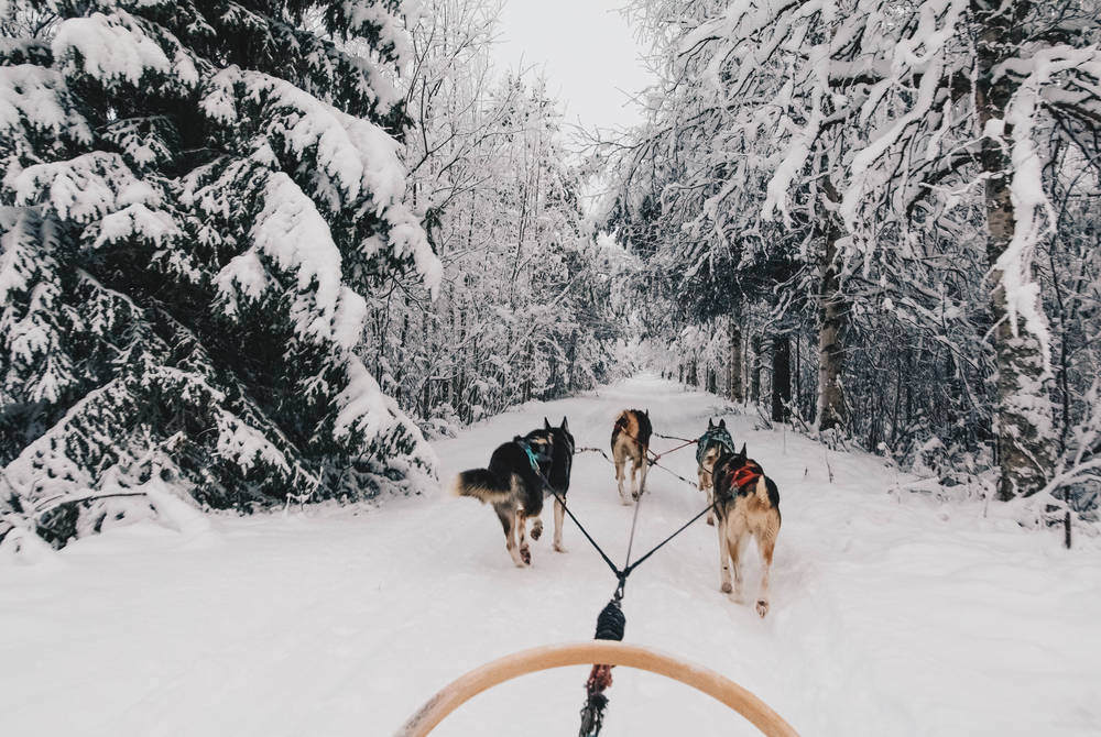 Husky sledding, Apukka Resort, Finland