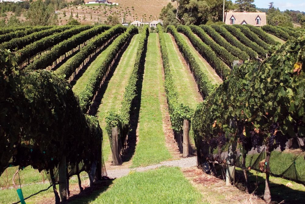 Hawke's Bay Vineyards, New Zealand
