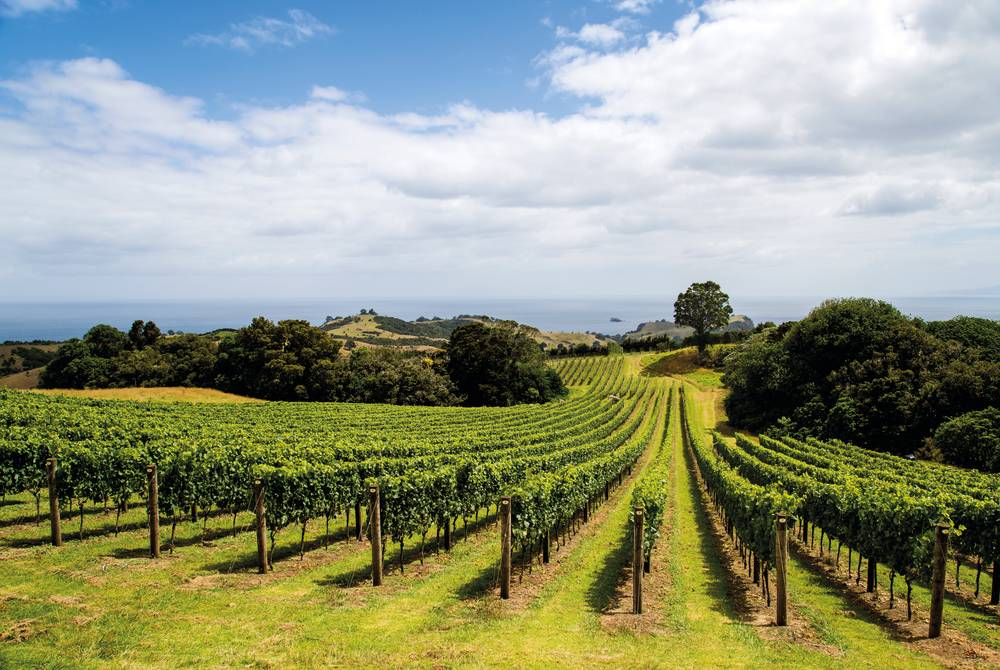 Hawke's Bay vineyards, New Zealand