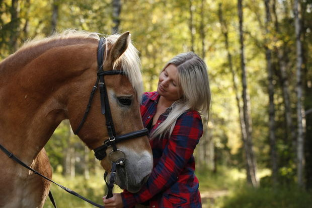 Finnish horse in Levi, Finnish Lapland