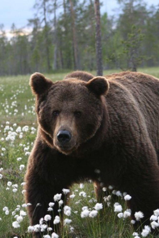 Hotel Kalevala bear