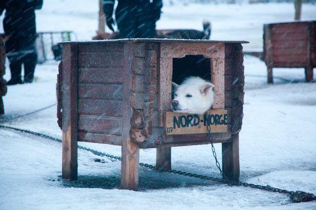 Huskies in Tromso Norway Villmarkssenter Best Served Scandinavia
