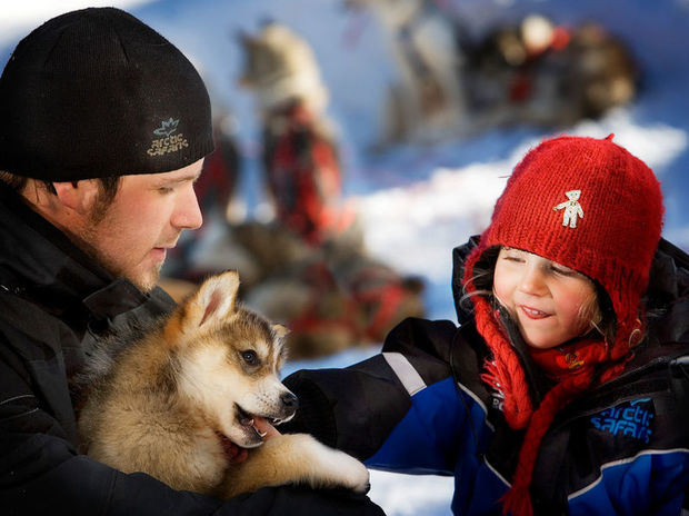 Husky sledding puppies in Saariselka, Finnish Lapland