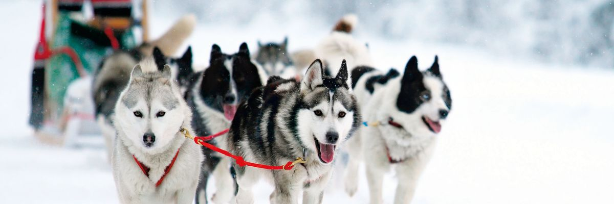 Husky Sledding, Swedish Lapland