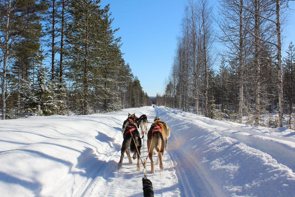 Miranda Berliand husky sledding in Rovaniemi, Finland