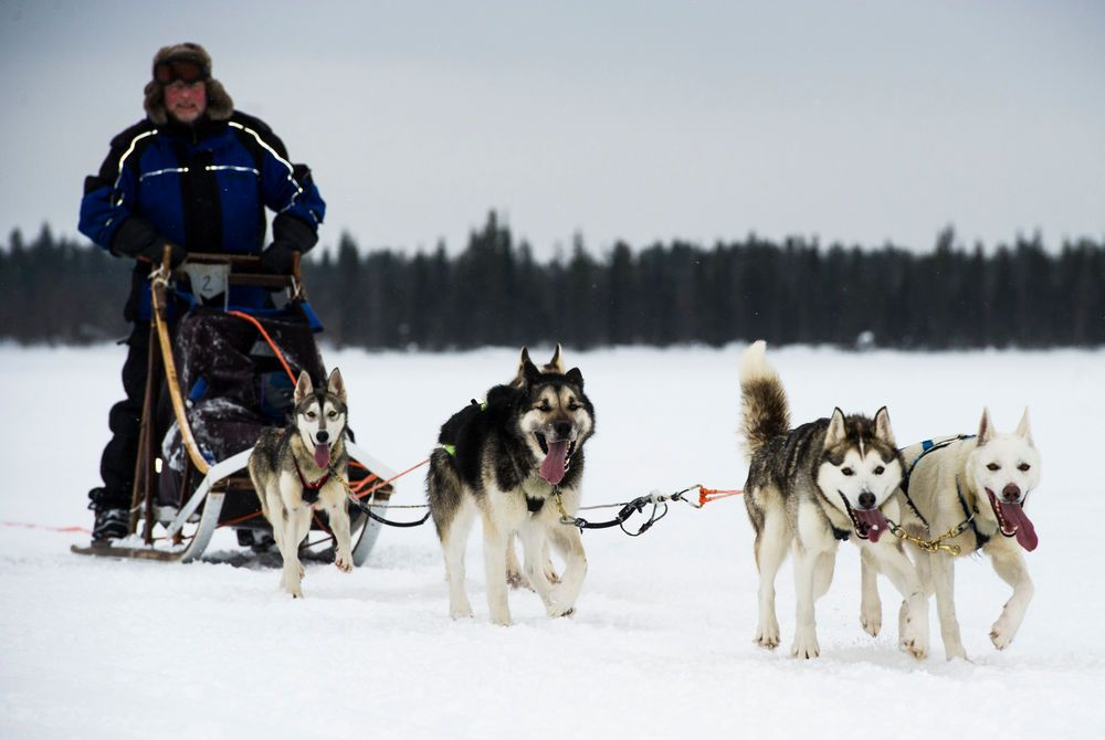 Husky sledding, Hotel Harriniva, Finnish Lapland