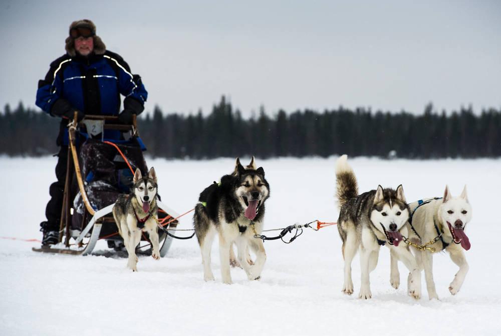 Husky sledding, Hotel Harriniva