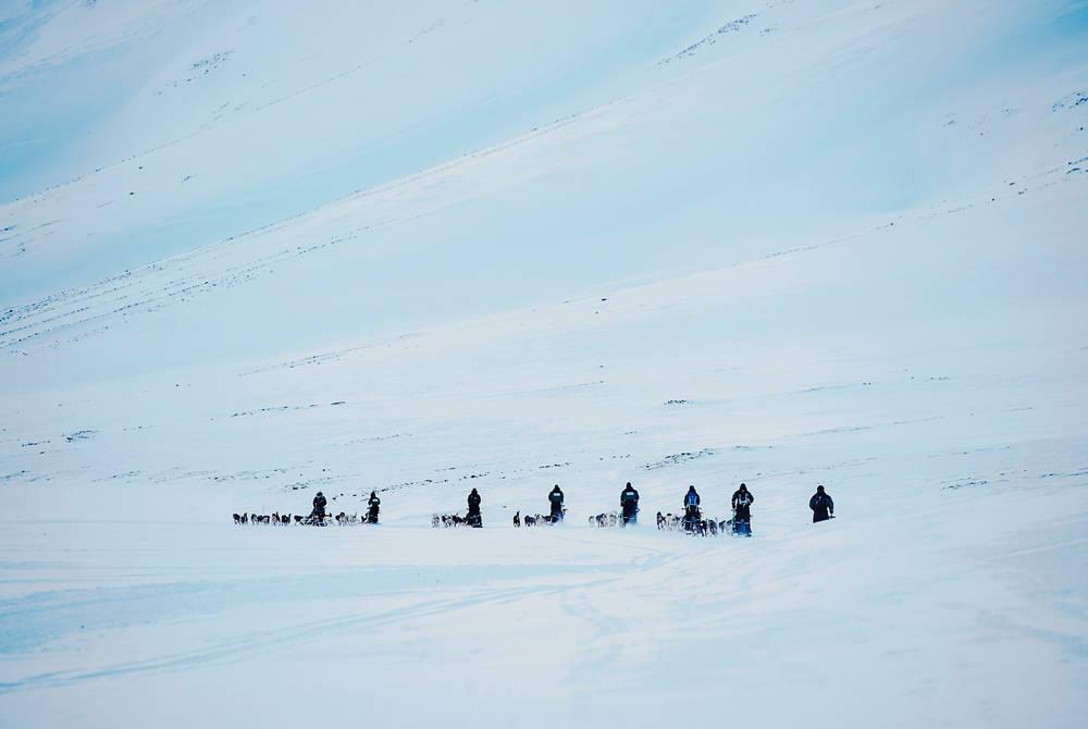 Husky Sledding, Hurtigruten Svalbard