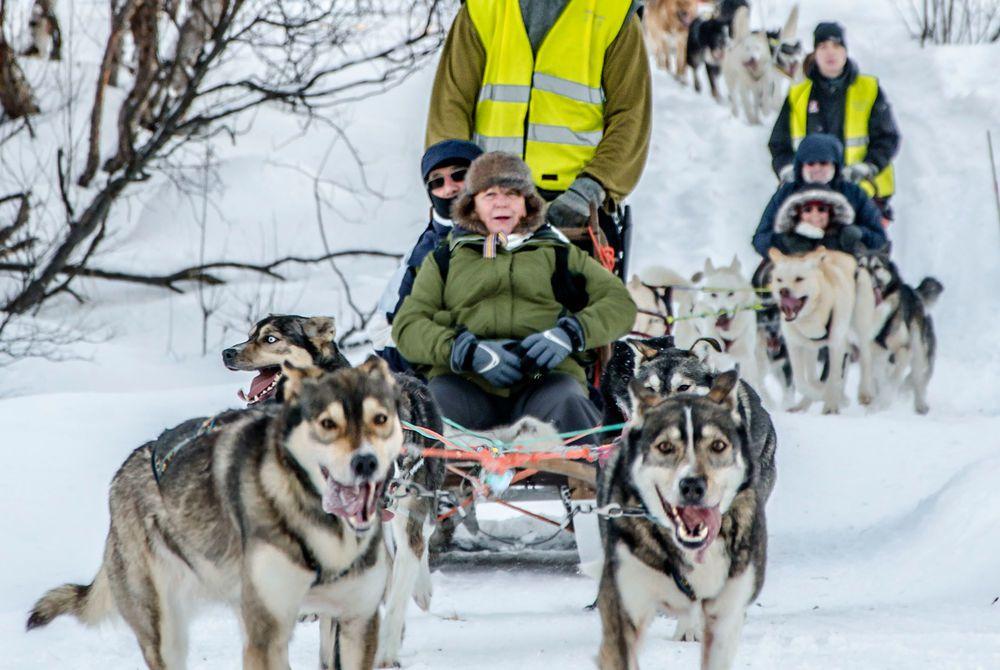 Husky Sledding, Kirkenes Snowhotel