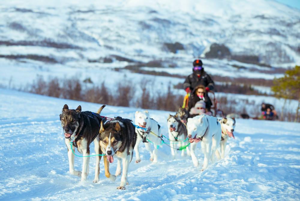 Husky Sledding, Villmarkssenter, Tromso