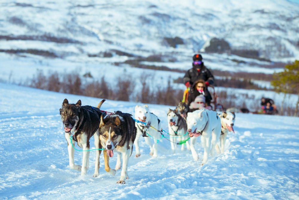 Husky dog sledding excursion in Tromso Norway