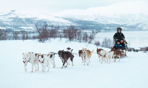 Husky Sledding in Tromso