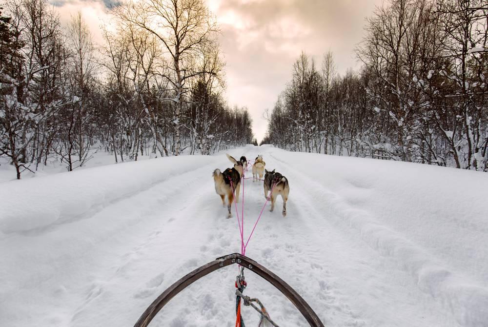 Husky Sledding at Arctic Panorama Lodge