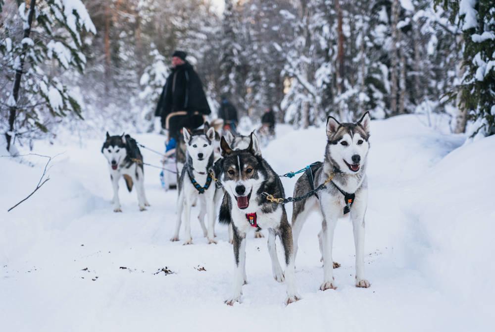 Husky adventure, Apukka Resort, Finland
