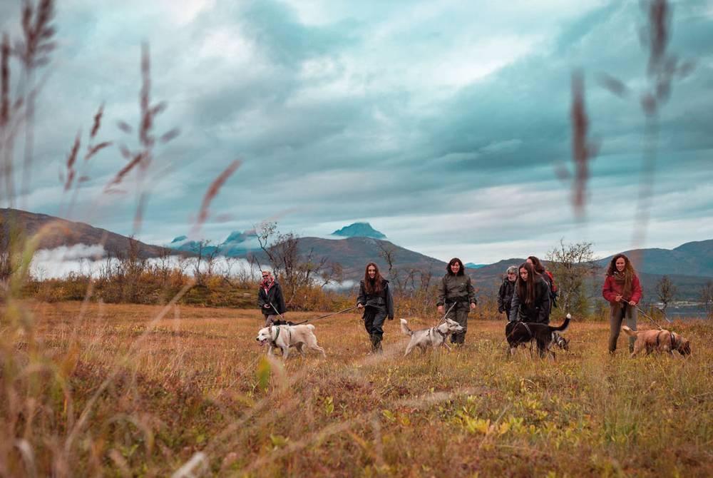 Husky hike, Tromso
