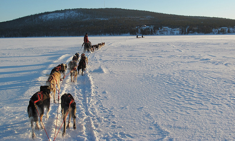Husky sled airport transfer