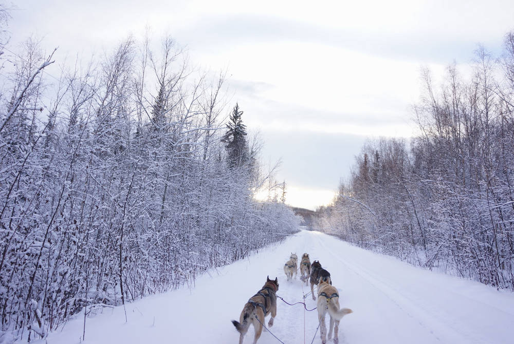 Husky sledding, Fairbanks, Alaska
