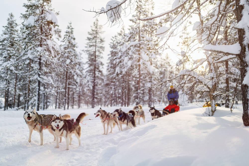 Husky sledding, Levi