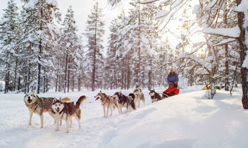 Top tips for visiting Lapland in winter