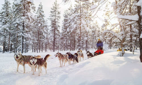 Guide to husky sledding