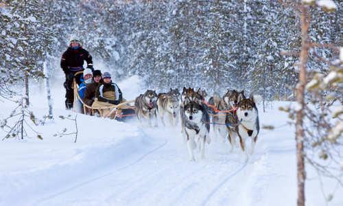 Husky sledding at Rovaniemi (Credit: Visit Rovaniemi)