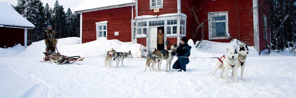 Husky sledding at Rovaniemi