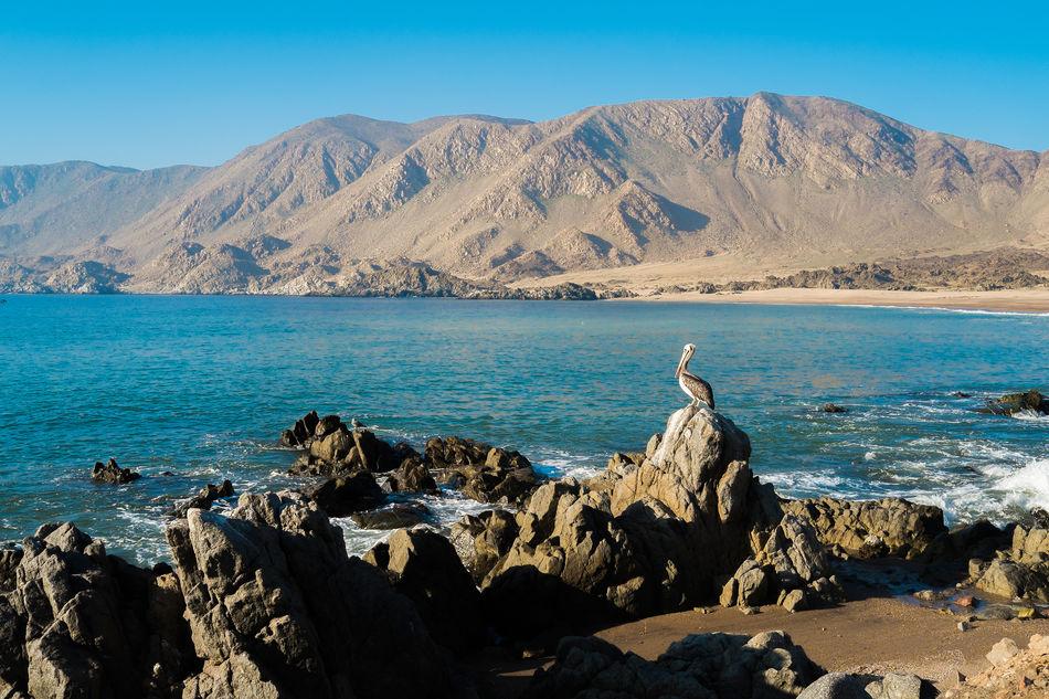 View of Isla Pan de Azucar in Chile