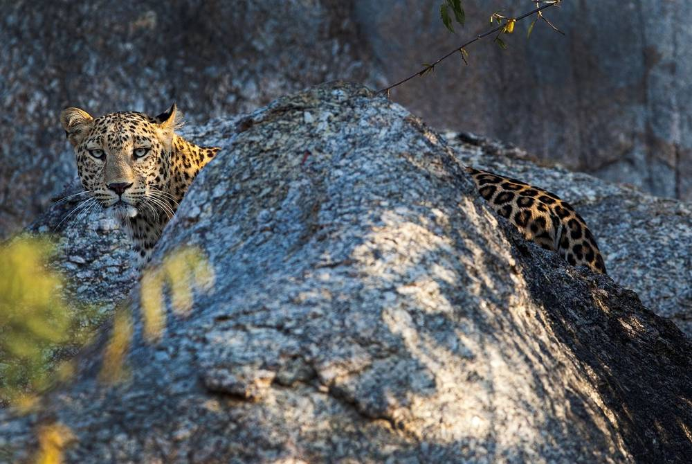 JAWAI Leopard Camp, Rankpur, India