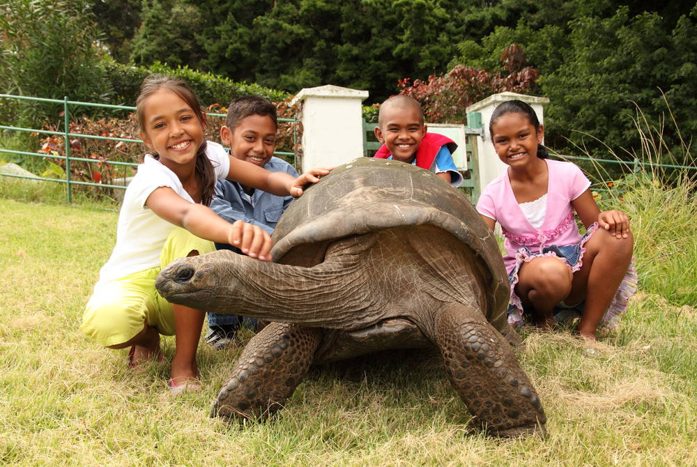 Jonathan the giant tortoise