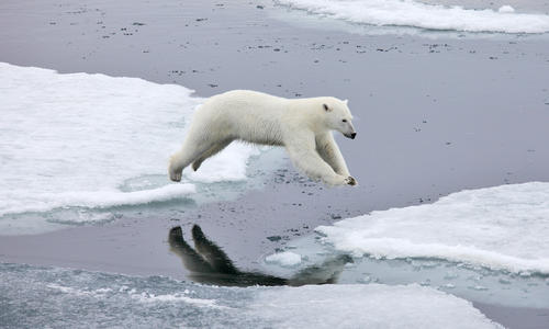 Seeing Svalbard's polar bears