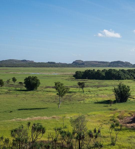Wetland landscapes near Darwin