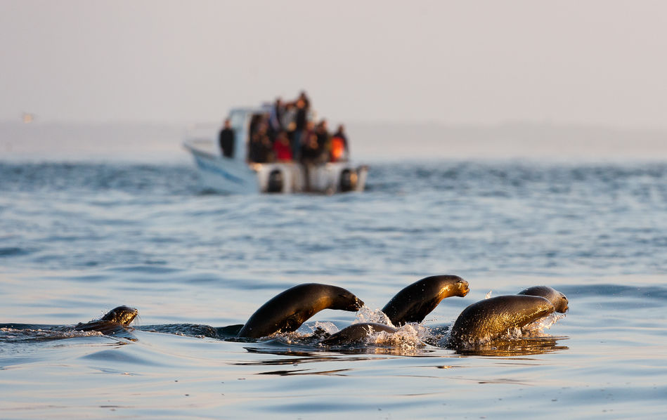 Seals at Kalk Bay, Cape Town