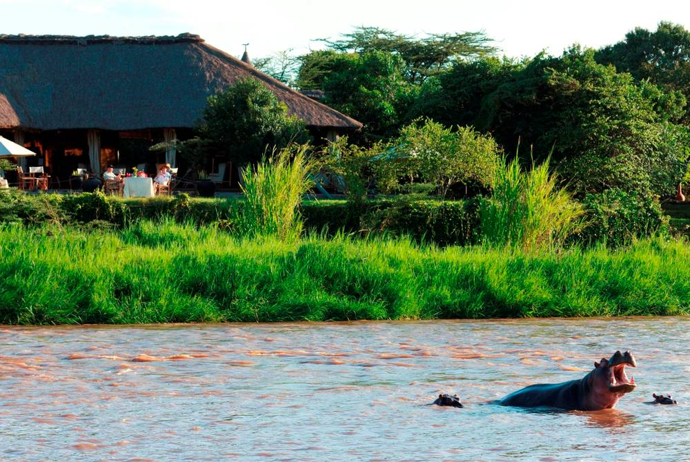 Resident hippo outside the main lodge