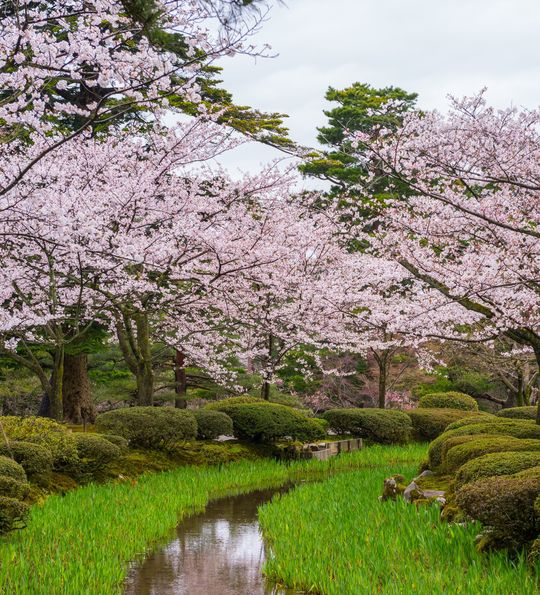 Kenrokuen Gardens in Kanazawa Japan