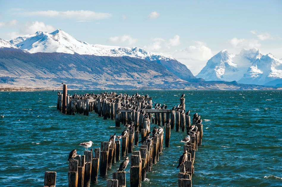 King Cormorant Colony, Old Dock, Puerto Natales in Chile