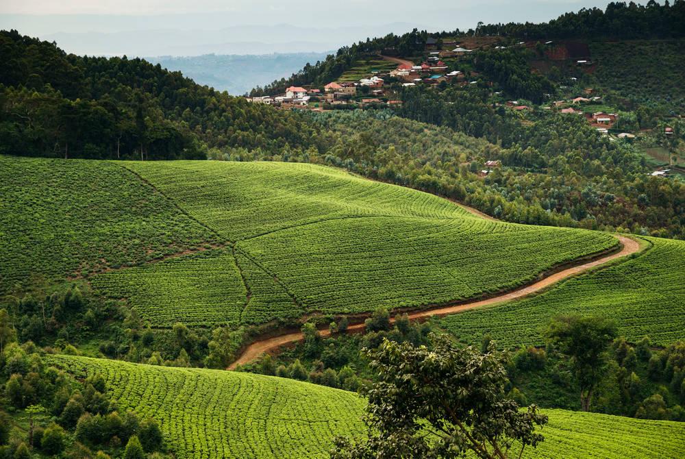 Landscape, One & Only Nyungwe House, Rwanda