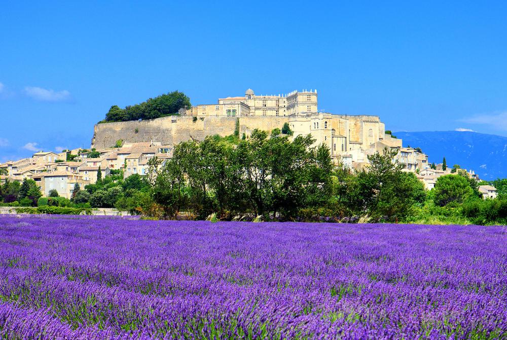 Lavender fields, Grignan