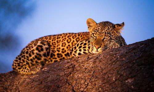 Leopard in Sabi Sand Game Reserve