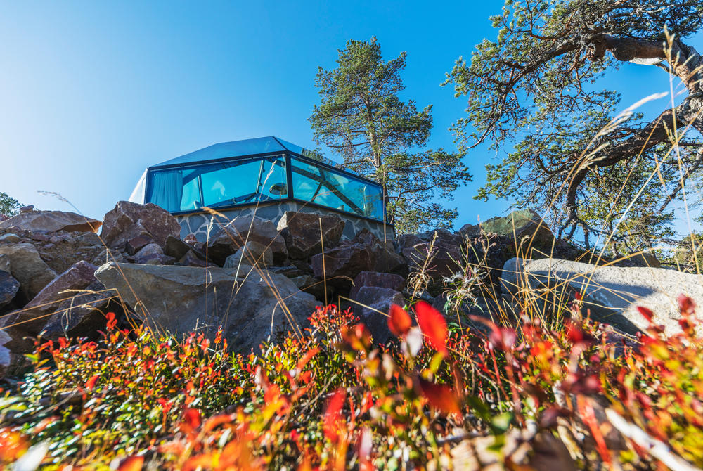 Flowers blooming at Levin Iglut in Finland