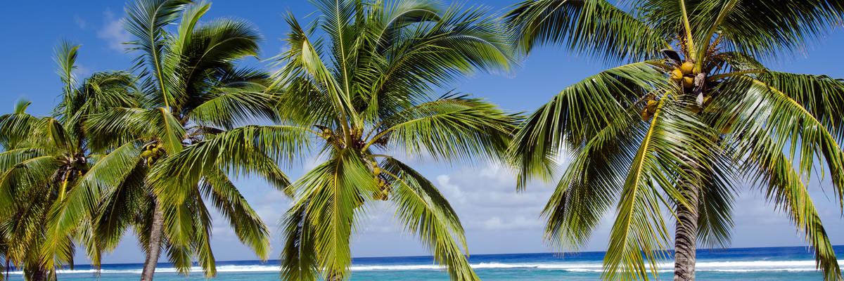 Line of coconut palm trees at Titikaveka beach, Rarotonga, Cook Islands