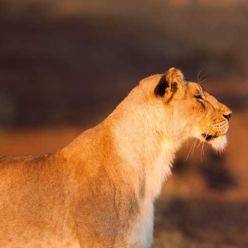 The best safaris for 2020