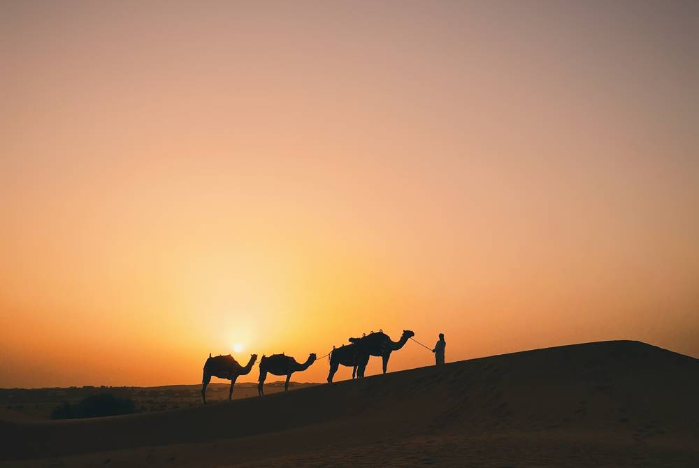 Camels during sunset, The Al Maha Desert Resort, Dubai