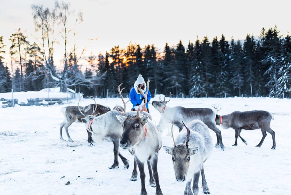 Local Sami culture