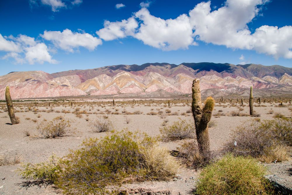 Los Cardones National Park, Salta Province, Argentina